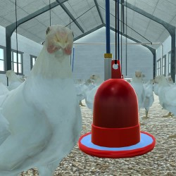 Virtual Chicken